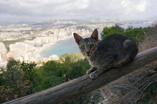 Scopriamo se i gatti hanno paura delle altezze