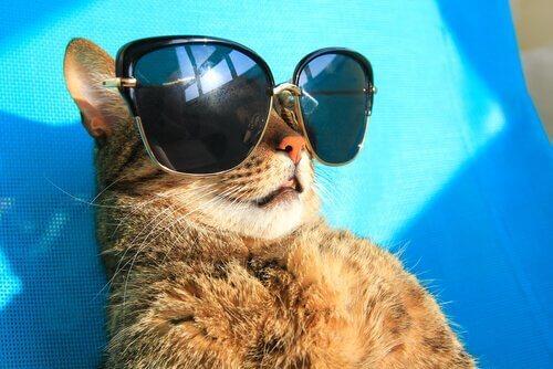 Gli effetti del sole sulla pelle del vostro gatto