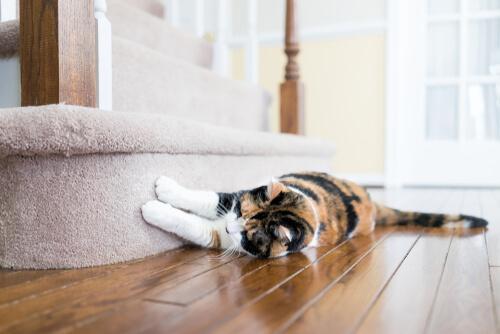 Gatto che gratta scale