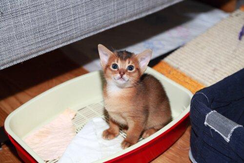 Gattino seduto dentro la lettiera