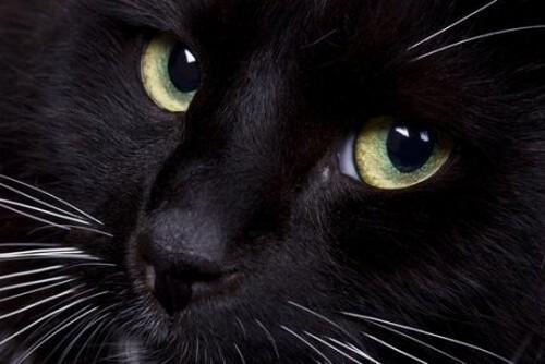 La terza palpebra dei gatti