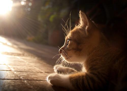 gatto rosso sdraiato