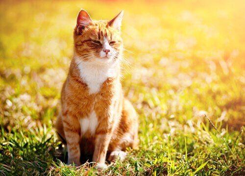 Un gatto al sole