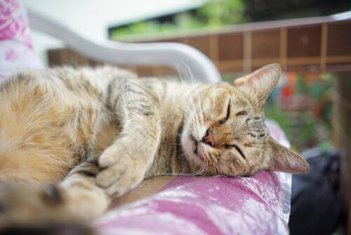 gatto che dorme su panchina