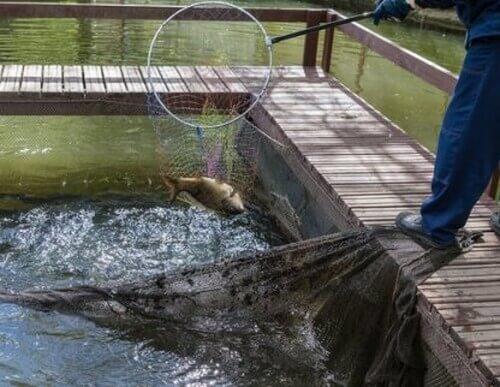 10 specie di pesci da allevamento