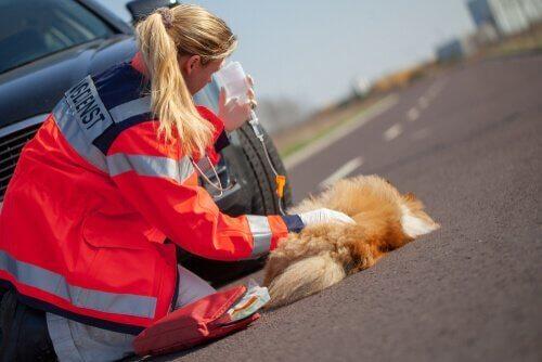 Donna soccorre cane investito