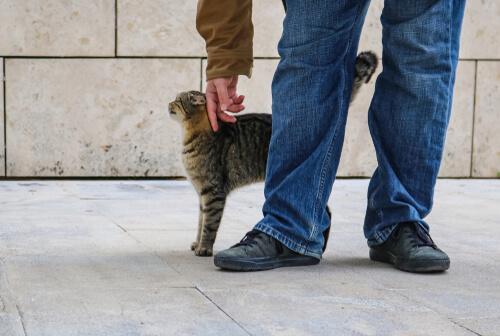Tutte le informazioni sui feromoni felini