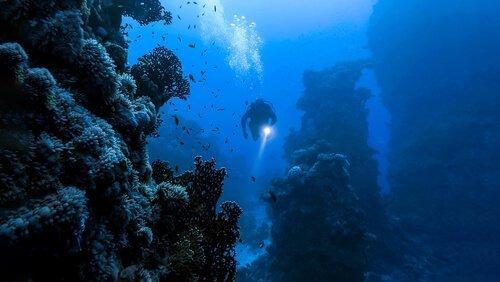 Gli insetti marini: esistono davvero?