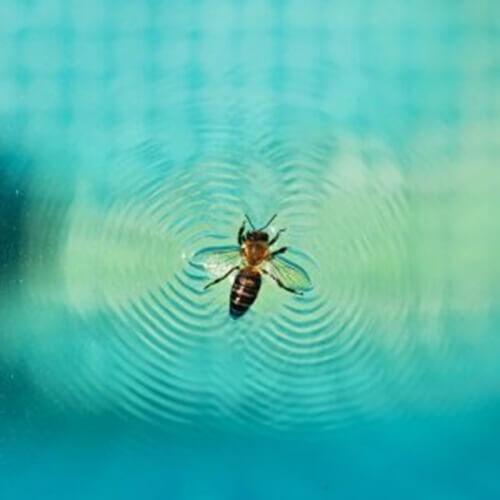 Come evitare gli insetti in piscina: manutenzione e trucchi