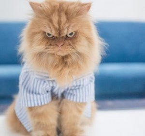 I profili dei gatti più famosi di Instagram