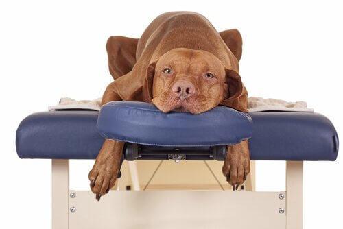 Massaggi per cane