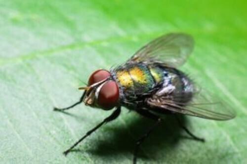Perché ci sono più mosche in estate?