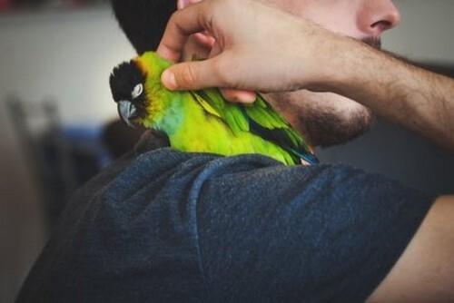 Viaggiare con gli uccelli: come fare?