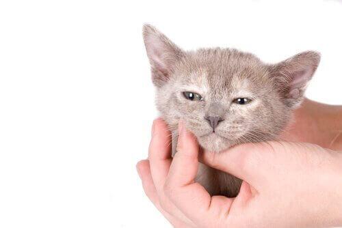 gattino viene accarezzato