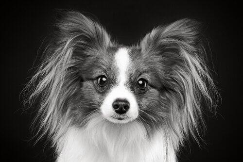 Pelo grigio cane giovane