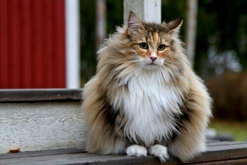 Pelo lucido gatto