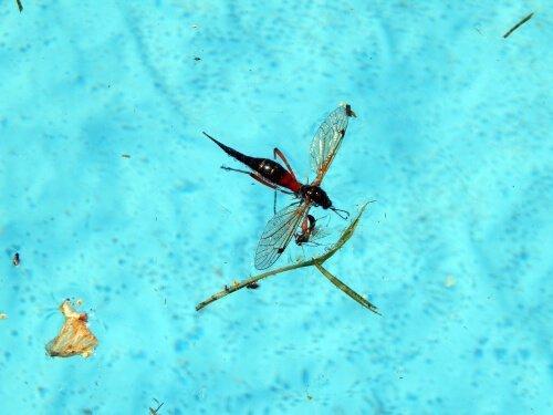 evitare gli insetti in piscina come fare