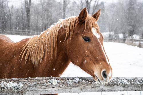 Come prendersi cura di un cavallo in inverno
