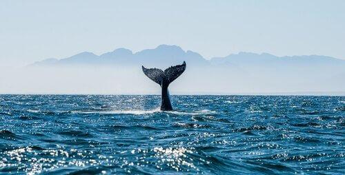 Proteggere le balene: un'area protetta nelle Baleari