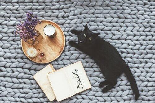Racconti sui gatti