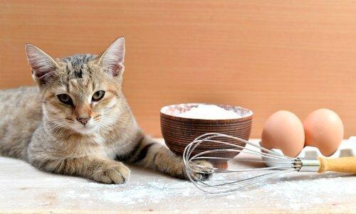 Ricette per i gatti