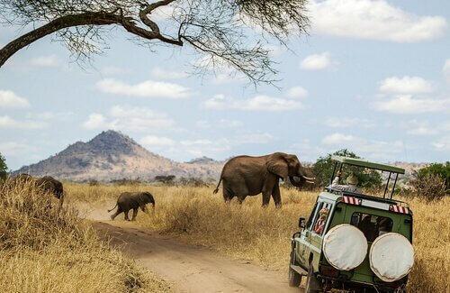 Consigli per fare un safari