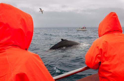 Si denuncia la caccia alla balenottera azzurra