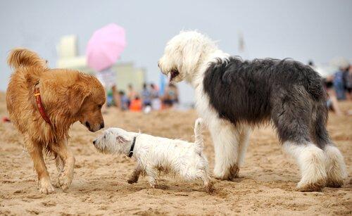 Socializzazione dei cuccioli