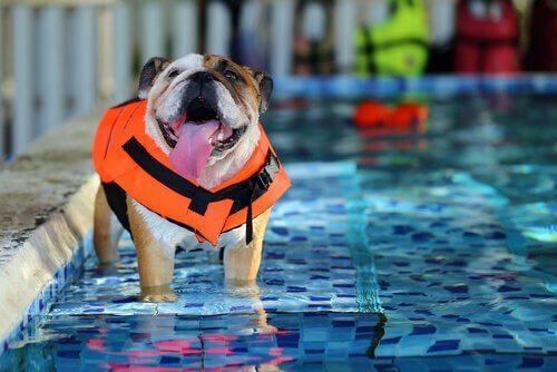 Spa per cani: tutto quello che dovete sapere