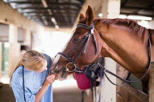 Specialista cavalli
