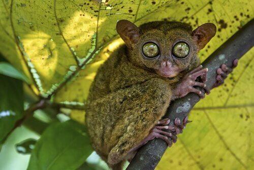 I 5 animali più strani del mondo