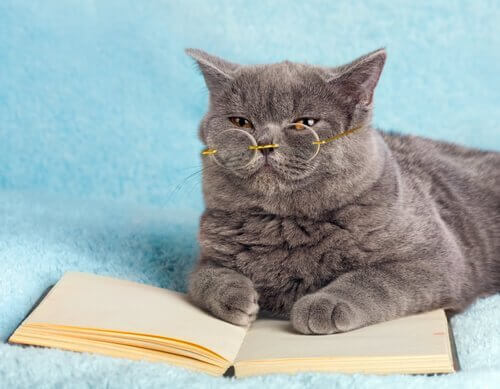 Racconti sui gatti: eccone alcuni imperdibili