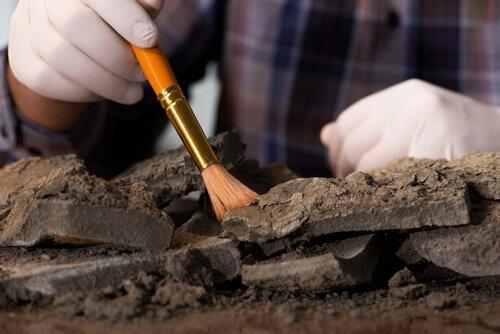 Studi archeologici