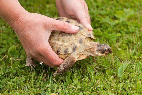 Tartaruga nel prato