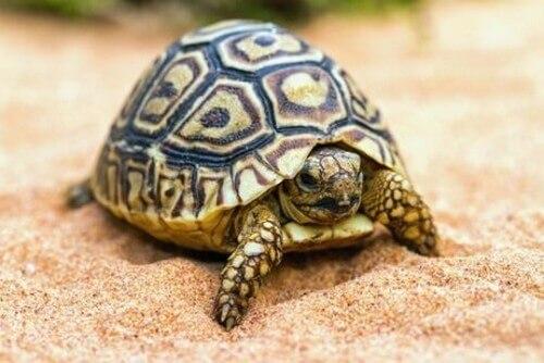 Consigli per chi vuole una tartaruga come animale domestico