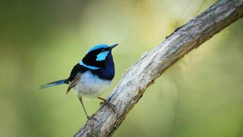 Un uccello capisce altri volatili di specie diverse
