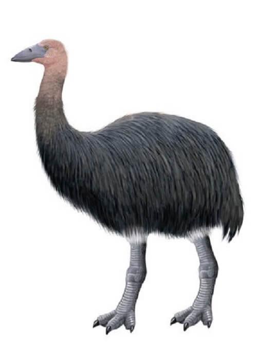 Uccello elefante: una specie estinta del Madagascar