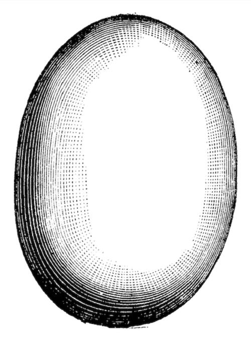 uovo di uccello elefante