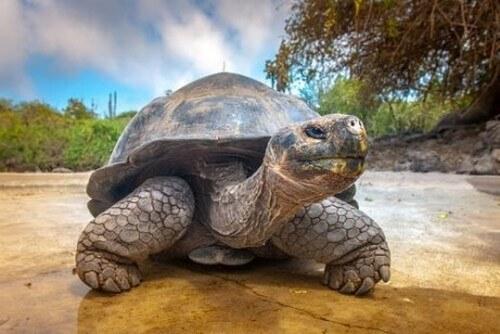 Le differenze fra la tartaruga d'acqua e di terra
