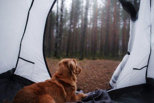 Si può andare in campeggio con il cane?