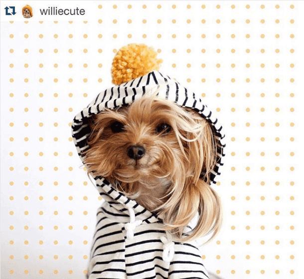 Willie Cute