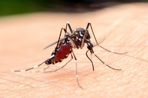 Zanzara trasmette malaria