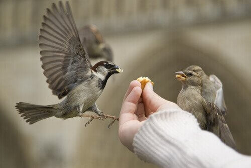 Come alimentare un uccello ferito