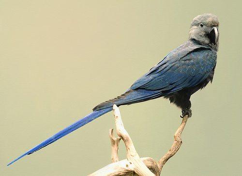 Uccello del film Rio