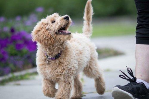 Passeggiata con il cane