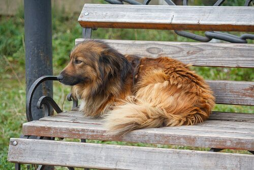 Cane randagio seduto su una panchina