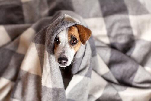 Coronavirus canino: sintomi e trattamenti