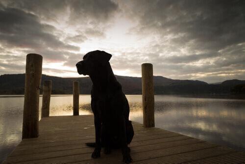 Cane vicino al fiume