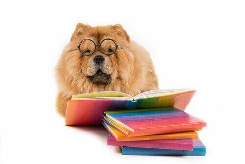 I migliori racconti sui cani per bambini