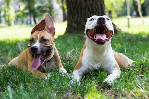 E' importante che il vostro cane impari a socializzare